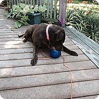 Adopt A Pet :: Emma May Chelsea - Hollis, ME