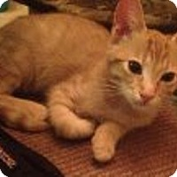 Adopt A Pet :: Rojo - Chandler, AZ