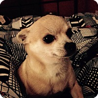 Adopt A Pet :: Eloise - San Francisco, CA