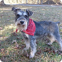 Adopt A Pet :: Brandon - Mocksville, NC