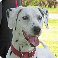 Adopt A Pet :: Domino - Turlock, CA