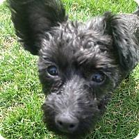 Adopt A Pet :: Malia - Elkhart, IN