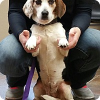 Adopt A Pet :: Maggie- Adopted! - Lisbon, OH