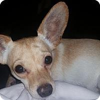 Adopt A Pet :: Eamon - S. Pasedena, FL