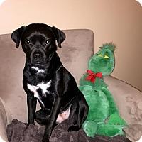 Adopt A Pet :: Mae meet me 2/6 - Manchester, CT