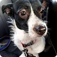 Adopt A Pet :: Dixie - Elyria, OH