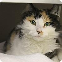 Adopt A Pet :: Scruffy - Medina, OH