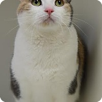 Adopt A Pet :: Abigail - DFW Metroplex, TX