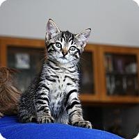 Adopt A Pet :: KITTY BONANZA ROCKY'14 - New York, NY