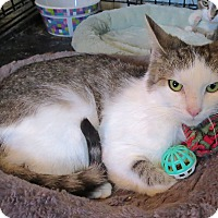 Adopt A Pet :: luke - Fort Wayne, IN