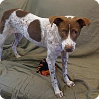 Adopt A Pet :: 'CINDY' - Agoura Hills, CA