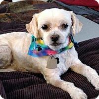 Adopt A Pet :: Max - Arlington, VA