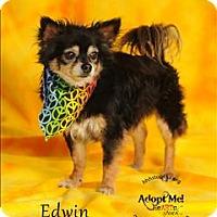 Adopt A Pet :: Edwin - Topeka, KS