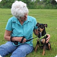 Adopt A Pet :: Leggs - Elyria, OH
