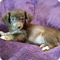 Adopt A Pet :: Willie - Lawrenceville, GA