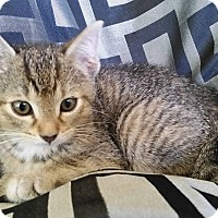 Adopt A Pet :: Vel -In Foster - South Haven, MI