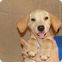 Adopt A Pet :: Windy - Oviedo, FL