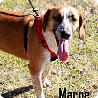 Adopt A Pet :: Marge - Arkadelphia, AR