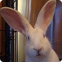Adopt A Pet :: Elsa - Woburn, MA
