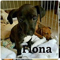 Terrier (Unknown Type, Small) Mix Puppy for adoption in Rancho Cucamonga, California - Fiona
