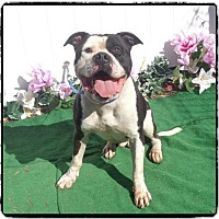 Adopt A Pet :: Tyson - Norwood, GA