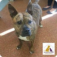 Adopt A Pet :: MiMi - Eighty Four, PA