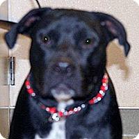 Adopt A Pet :: Maui - Wildomar, CA