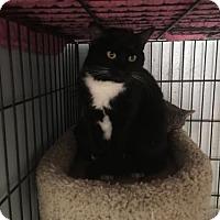 Adopt A Pet :: Ethel - Alpharetta, GA