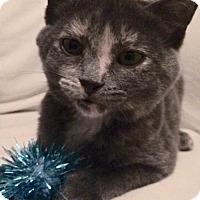 Adopt A Pet :: Dara C1564 - Shakopee, MN