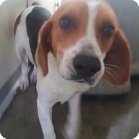 Adopt A Pet :: Valor - Ridgeland, SC