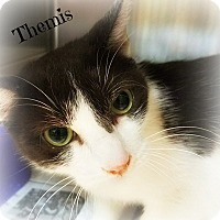 Adopt A Pet :: Themis - Ocean Springs, MS