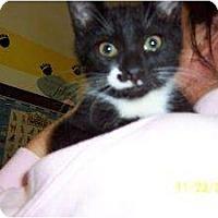 Adopt A Pet :: Emily - Island Park, NY