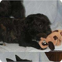 Adopt A Pet :: Tad - Antioch, IL