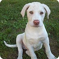 Adopt A Pet :: Finnick - Adamsville, TN
