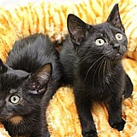 Adopt A Pet :: Dexter & Dwayne - Chicago, IL