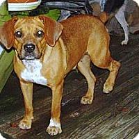Adopt A Pet :: Tessa - Maysel, WV