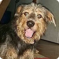 Adopt A Pet :: Stanley - Austin, TX