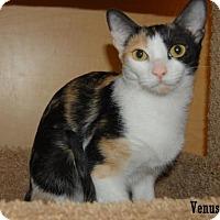 Adopt A Pet :: Venus - Buena Park, CA
