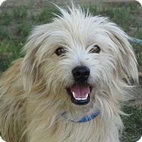 Adopt A Pet :: Benji - Turlock, CA