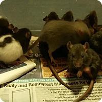 Adopt A Pet :: LEHIGHTON MOM and 11 BABIES! - Philadelphia, PA
