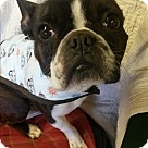 Adopt A Pet :: Rosie-pending
