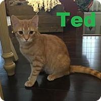 Adopt A Pet :: Ted - Shy Boy - Huntsville, ON