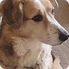 Adopt A Pet :: Pretty (COURTESY POST)