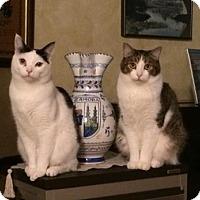 Adopt A Pet :: Nicky - Encinitas, CA