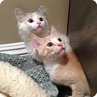 Adopt A Pet :: Lily & Toby - Los Angeles, CA