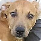 Adopt A Pet :: Dabney