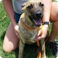 Adopt A Pet :: Tripp - Kingman, KS