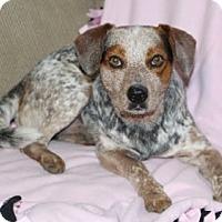 Adopt A Pet :: Wego - Avon, NY