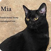 Adopt A Pet :: Mia - Ortonville, MI