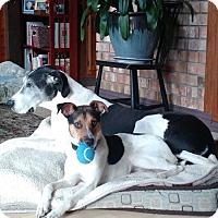 Adopt A Pet :: Howie - Courtesy Listing - Gig Harbor, WA